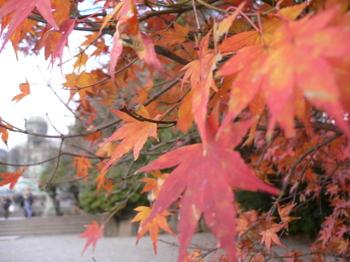 Kamakura2007_fall_009