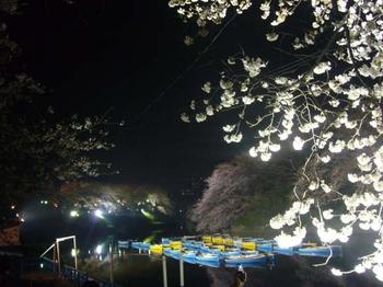 Chidorigafuchi_3