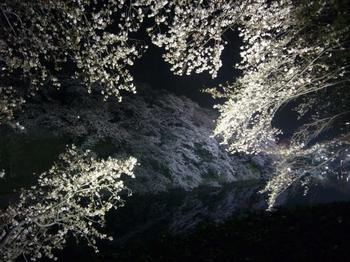 Chidorigafuchi_5