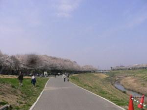 Sakura_2007_003