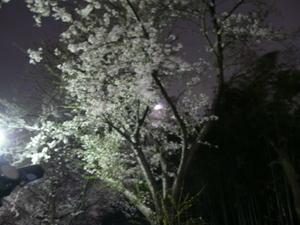 Sakura_2007_004
