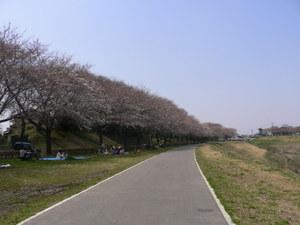 Sakura_2007_016