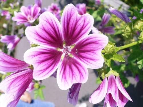 ぜるぶの丘の花