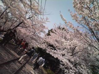 あーこ・春のひとり旅☆